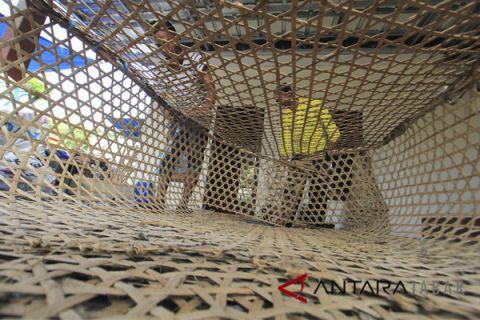 Nelayan membuat bubu perangkap ikan