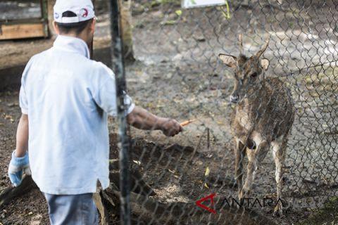 Bandung Zoo lakukan pertukaran satwa ke Solo Zoo