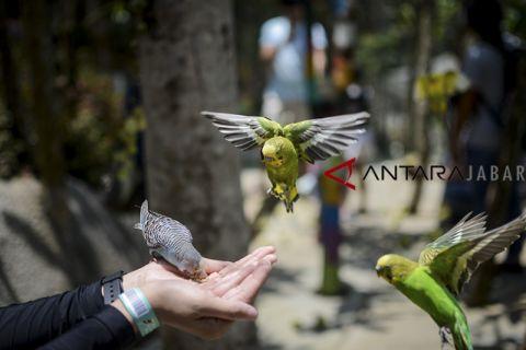 Wisata taman burung di Bandung