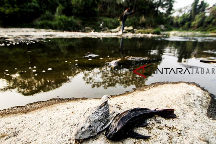 Sungai Cileungsi tercemar limbah