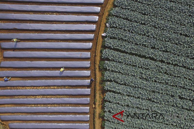 Tantangan pertanian Indonesia