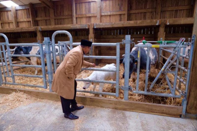 Ini kesan Wagub Jabar terhadap metode peternakan sapi di Belgia