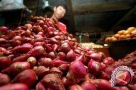 Kalbar Tekan Inflasi Dengan Produksi Bawang Merah