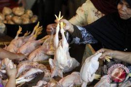 Harga ayam potong masih belum stabil