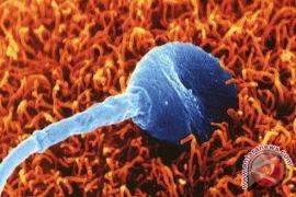 Kondisi yang tidak menguntungkan pada sperma