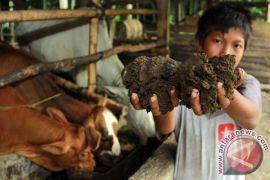 Dosen IPB Kembangkan Inovasi Pakan dari Limbah Sayur di Pasar