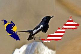 Polisi Amankan Ratusan Burung Kacer Asal Malaysia