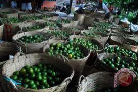 KMKS : Pemda Carikan Solusi Anjloknya Harga Jeruk