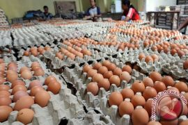 Harga telur ayam di Singkawang Rp24 ribu