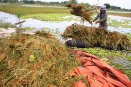 Petani minta perbaikan tanggul di Padang Tikar