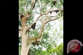 Dusun Meliau Dikunjungi Puluhan Wisman Setiap Tahunnya