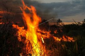 Puluhan hektare lahan gambut terbakar