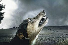 Distan Singkawang ambil sampel kepala anjing