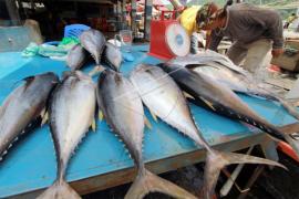 Harga ikan masih relatif stabil