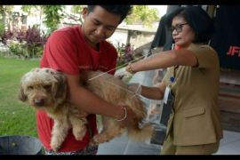 Distan Kota Singkawang vaksin 2.500 ekor anjing