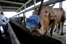 Sosialisasi penanganan hewan kurban