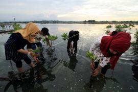Pelestarian Ekosistem Mangrove
