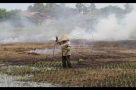 Luas tanaman padi Kalbar meningkat 1,05 persen