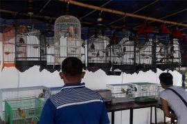 Lomba Kicau Burung Meriahkan Hut Ke-72 Armada