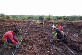 Kelompok Tani Mekarsari raih klaster inovatif nasional