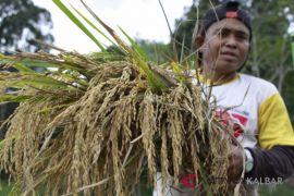Dorong kesejahteraan petani di Kalbar