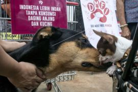 Parade Dog Meat-Free Indonesia