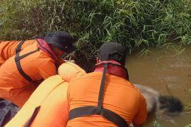 Seorang warga Sintang mengapung di Sungai Kapuas