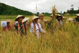 Produksi pangan Sanggau bagian strategi pertahanan negara