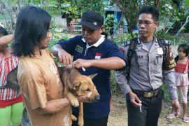 383 kasus gigitan anjing di Kalbar
