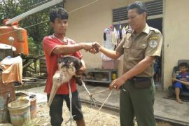 West Kalimantan release dozens of protected fauna