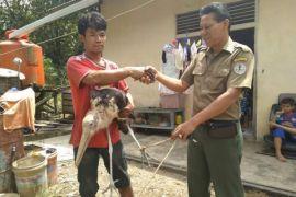 BKSDA Kalbar kembali lepasliarkan belasan satwa dilindungi