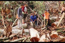 300 batang kayu olahan ilegal asal Ketapang diamankan