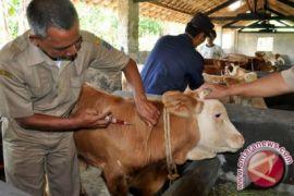 Pemeriksaan kesehatan hewan Kurban jelang Idul Adha