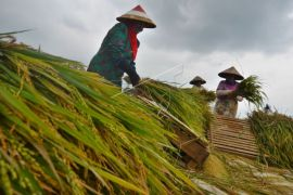 Sosialisasi asuransi pertanian harus digalakkan