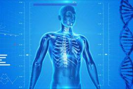 Bentuk tubuh berkaitan dengan kepribadian seseorang