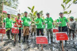 Pertamina tanam mangrove dan bangun rumah edukasi wisata mangrove