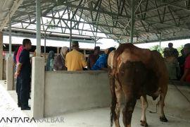 BI beri bantuan kandang sapi komunal untuk Sambas