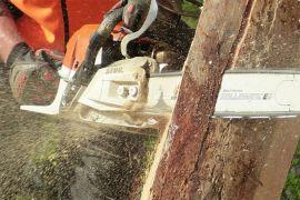 PLN pangkas pohon amankan pasokan listrik pelanggan