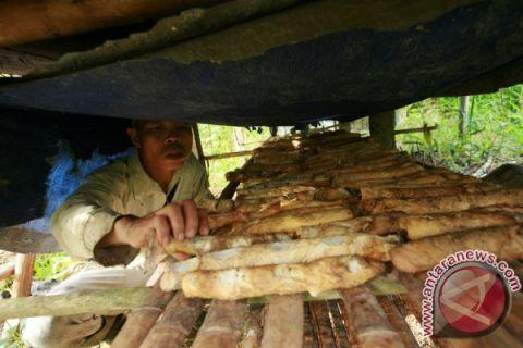 Petani karet Labian tingkatkan kualitas melalui ICS