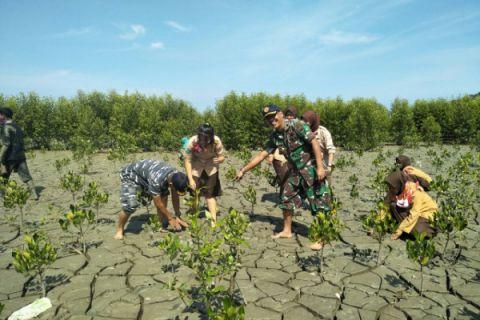 Lantamal XII Pontianak dan Pramuka tanam pohon mangrove