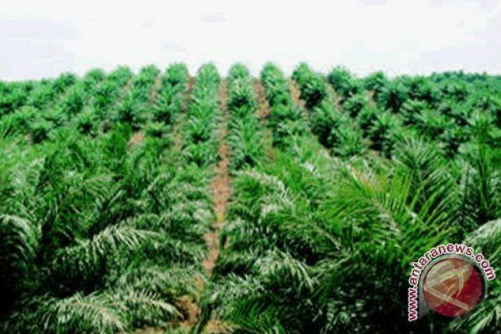Baru 16 perusahaan kelapa sawit Kalbar miliki ISPO