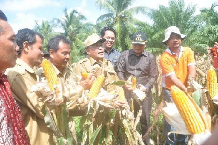 Pemprov Kalbar Dorong Perusahaan Perkebunan Tanam Jagung