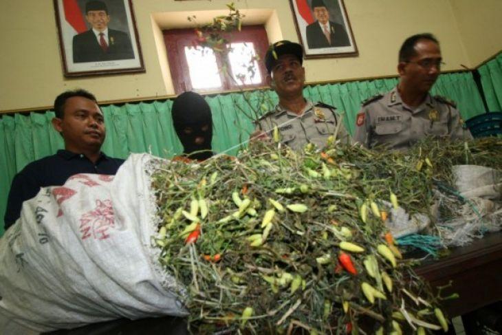 Harga Cabe Rawit Masih Tinggi di Sanggau