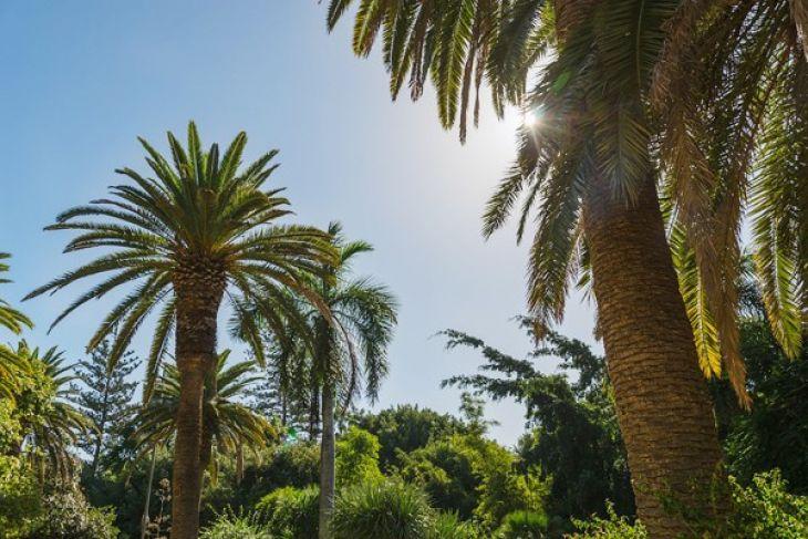 Kalbar Miliki Kebun Kemitraan Penerapan Sawit Berkelanjutan