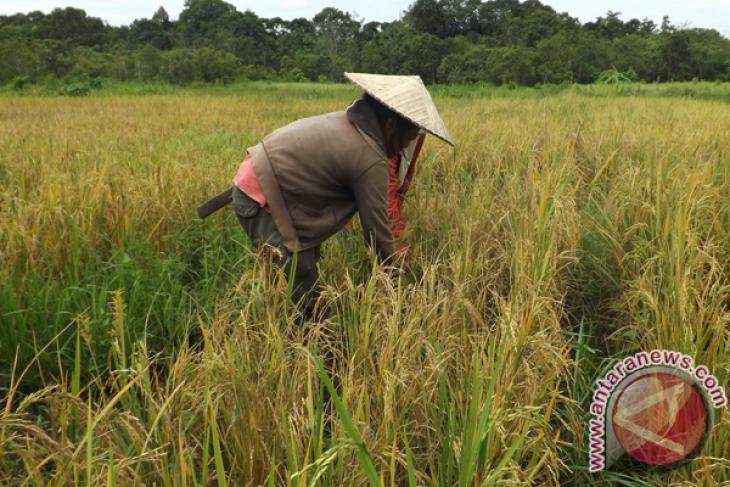 Hkti Memotivasi Pemuda Sambas Minati Bidang Pertanian Antara News