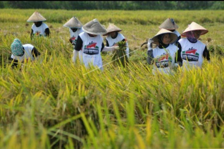 Pembentukan poktan guna memaksimalkan potensi pertanian desa