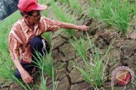 DPRD ingatkan Pemkab Kotabaru antisipasi gagal panen