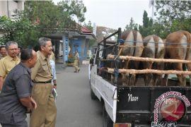 Kebutuhan daging sapi di Banjar sembilan ekor/hari