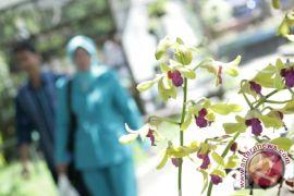 PAI Gelar Festival Anggrek Vanda Tricolor