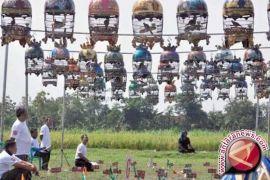 Lomba Burung HUT Balangan Hadirkan Juri Ronggo Lawe Nusantara